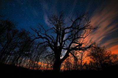 Il vecchio castagno e le stelle - Val Tidone