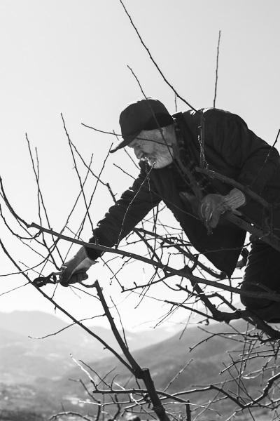 Valle Staffora - La potatura delle piante