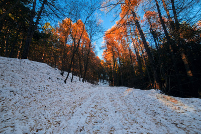Monte Alpe - La strada nel bosco che porta alla vetta
