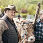 Pastori Mucche Varzi