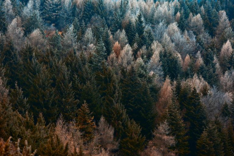 Foresta Appenninica