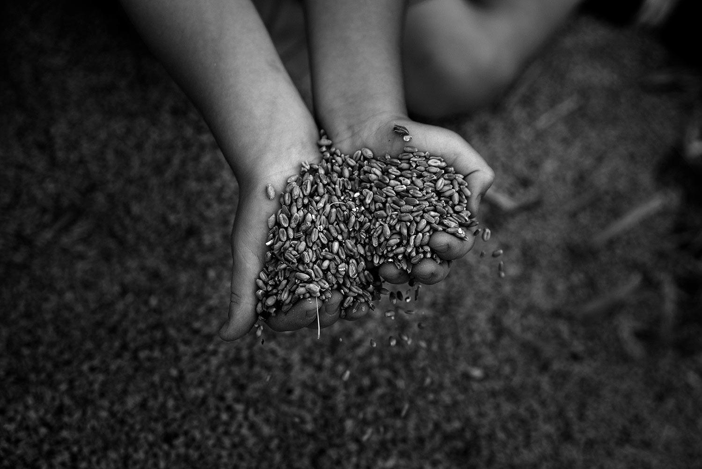 Tocchiamo il grano