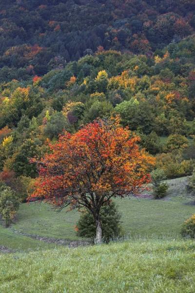 Autunno in alto Oltrepò - Versante Pavese del Monte Lesima