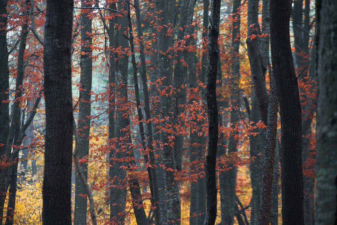 Foliage in Appennino