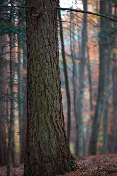 I colori della foresta appenninica