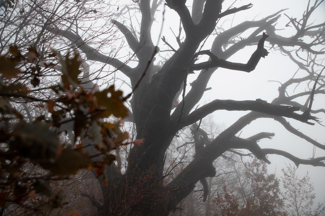 L'impiccato nel bosco