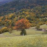 Monte Lesima in veste autunnale