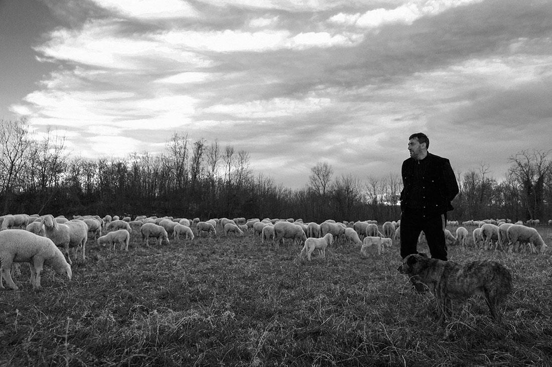 Pastore Pecore Pianura Padana