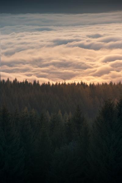 Monte Penice - Le Pinete e l'inversione termica